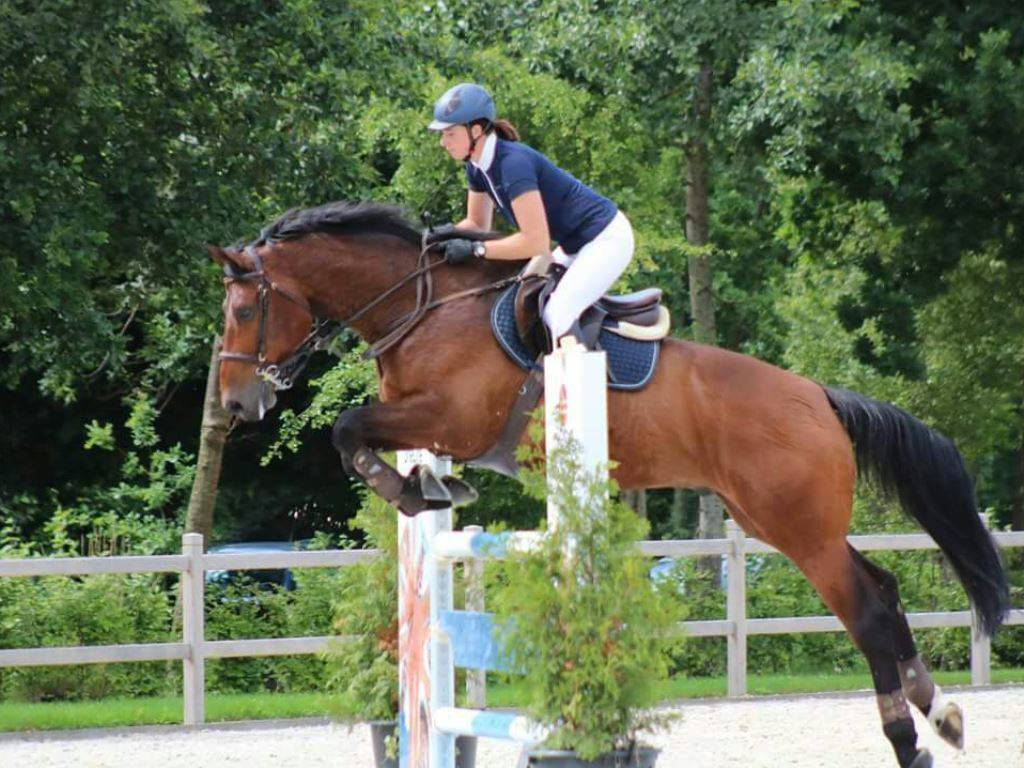 Jumping Gelding for Sale