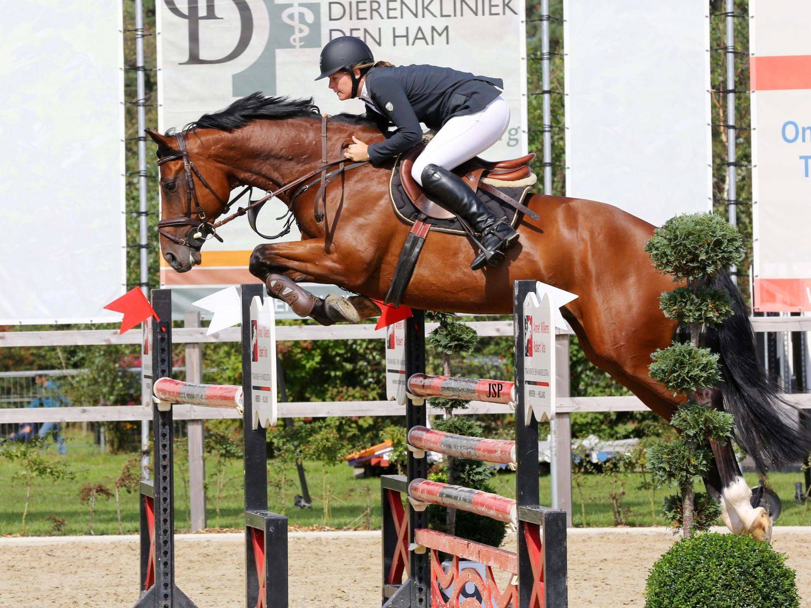 Show Jumping Gelding for Sale California Arizona