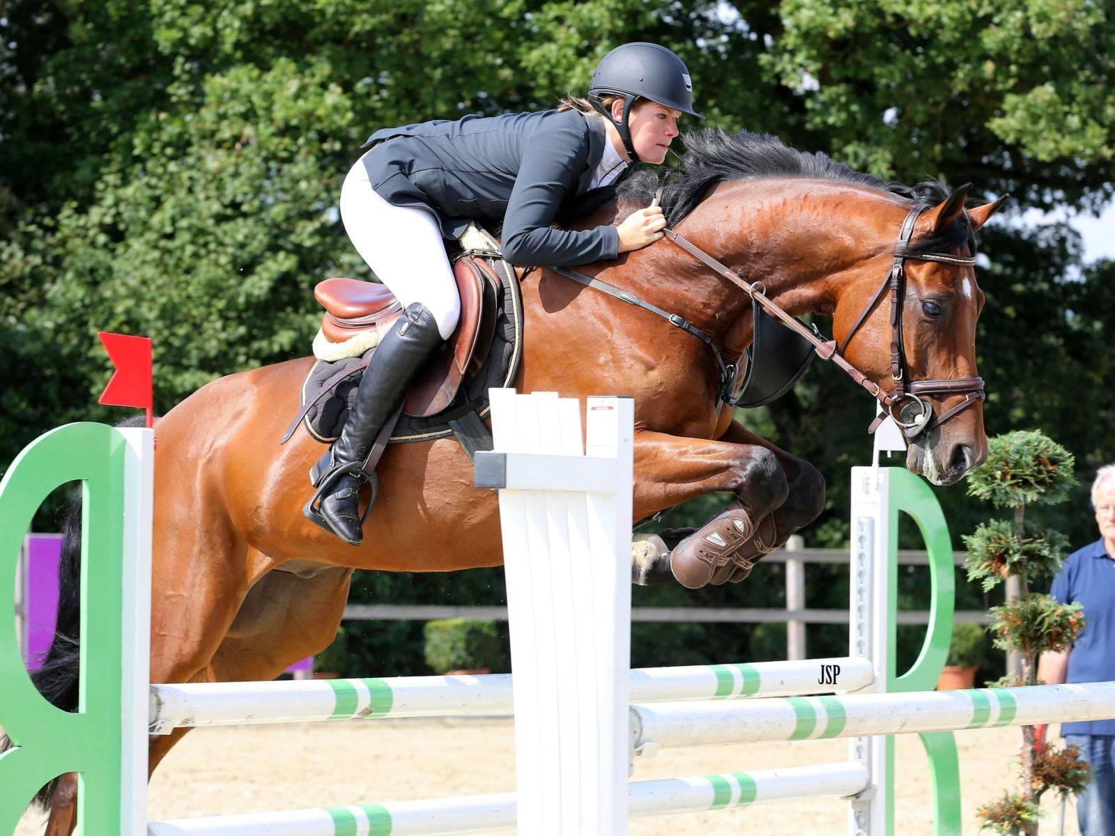 Dutch Show Jumping Horses for Sale California Arizona