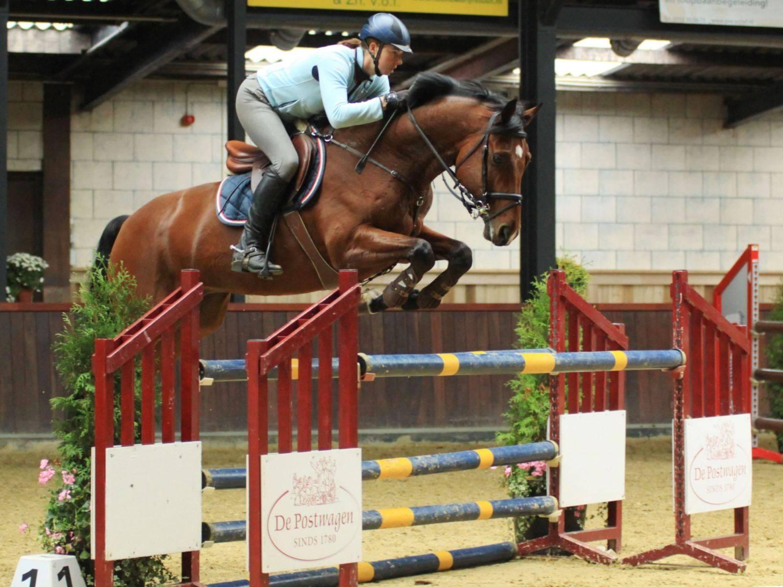 Horse for Sale California Arizona