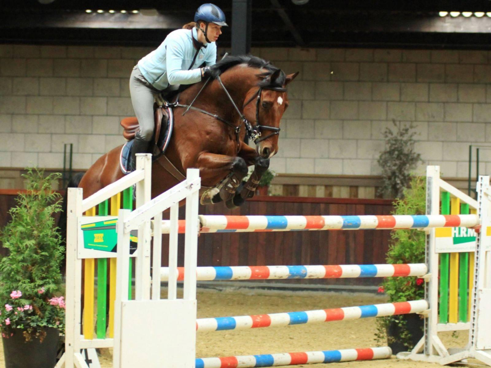 Jumping Horse for Sale California Arizona