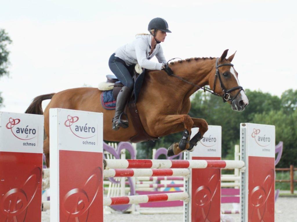 Warmblood Jumping Horses for Sale Saudi Arabia