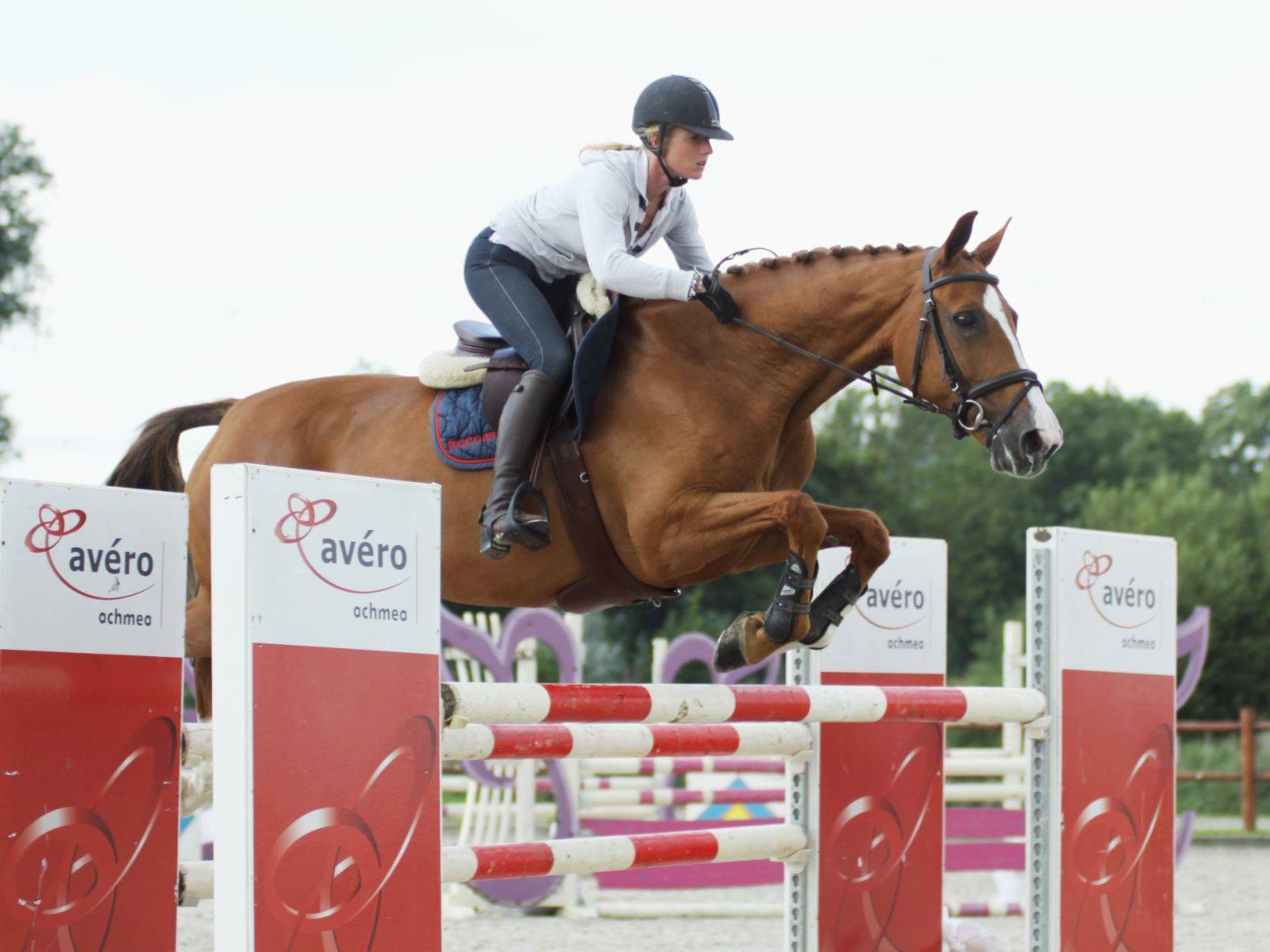 Warmblood Jumping Horses for Sale Saudi Arabia