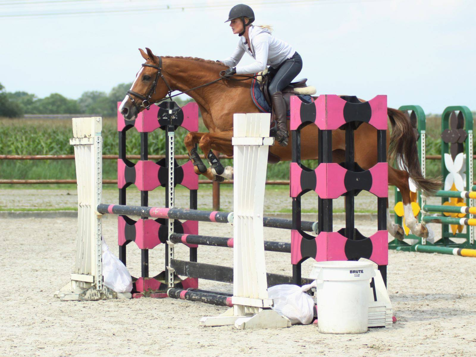Jumping Horses for Sale Saudi Arabia