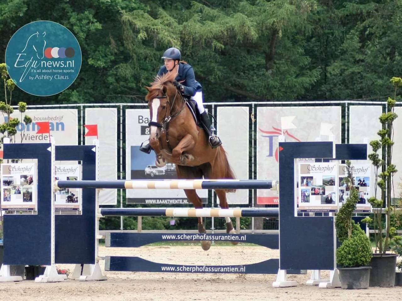 Jumping Mare for Sale Canada