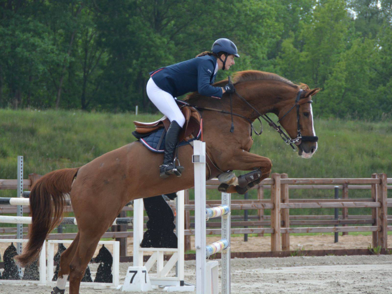 Show Jumping Horses for Sale Canada