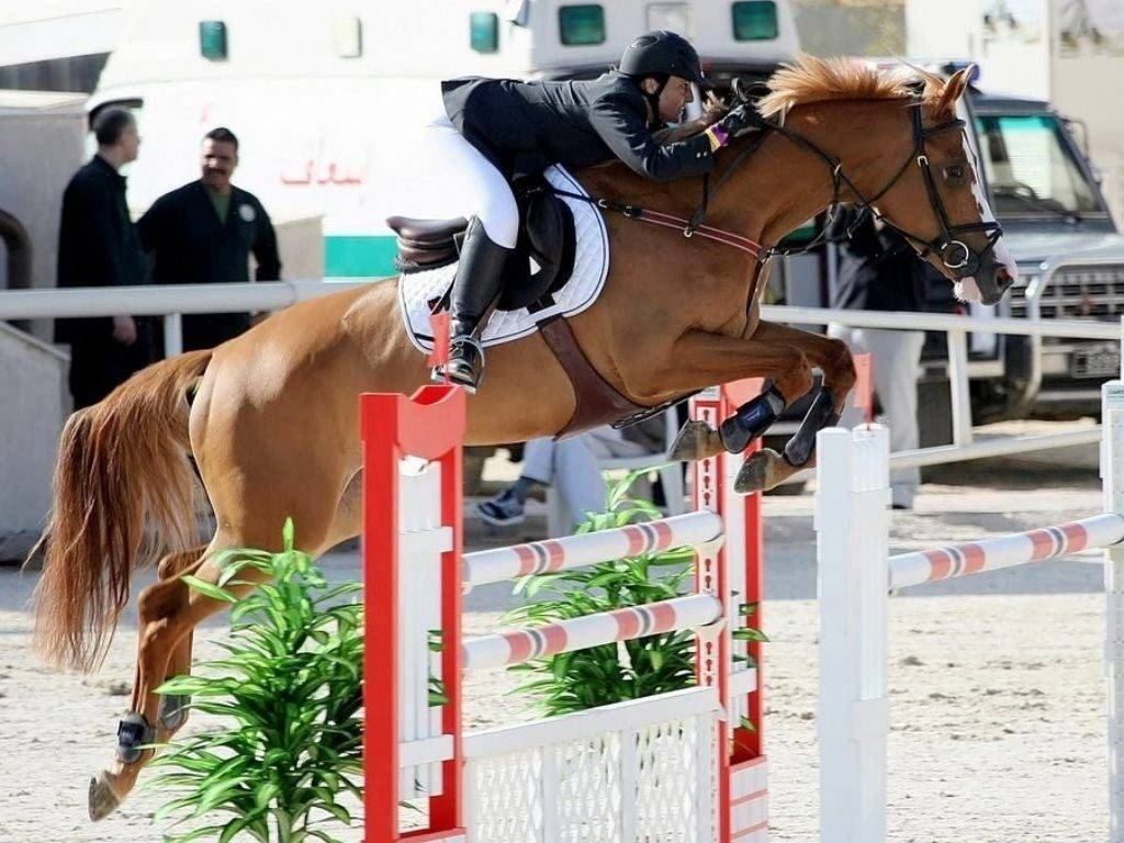 Show Jumping for Sale Kuwait