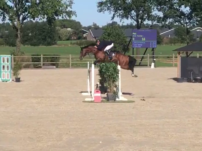 Jumping Stallion For Sale Zuuthoeve X Baloubet Du Rouet