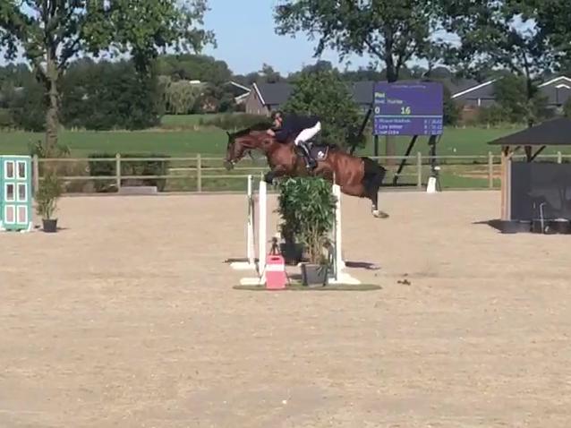 Grand Prix Show Jumping Stallion Zuuthoeve x Baloubet Du Rouet
